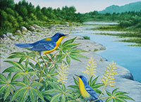 "Tropical Parulas on Hackberry Creek / Oil on canvas / 20"" x 16"""